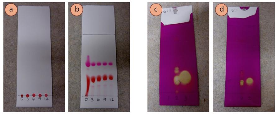Figura 6: a) Antes de la elución de las muestras de colorante alimentario rojo a diferentes diluciones acuosas, b) Después de la elución, c) Muestras de alquenos y alquinos demasiado concentrados (visualizados con el tinte KMnO4, d) Muestras de alquenos y alquinos a la dilución adecuada.