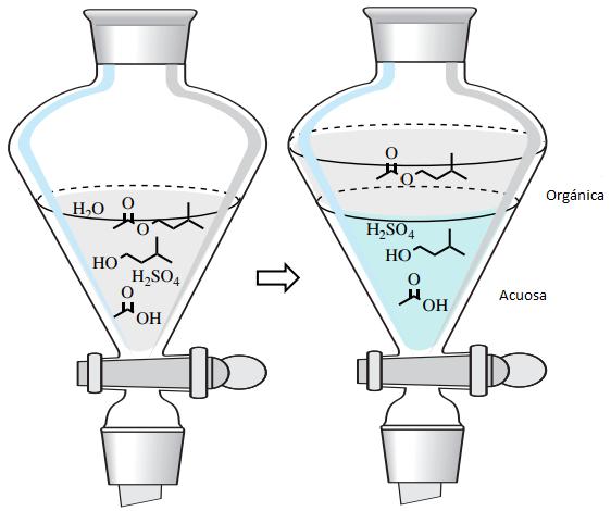 Figura 6: Extracción con agua y un disolvente orgánico para aislar el acetato de isopentilo de la mezcla de reacción.