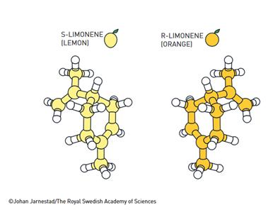 Muchas moléculas existen en dos variantes, en las que una es la imagen especular de la otra. A menudo tienen efectos completamente diferentes en el organismo. Por ejemplo, una versión de la molécula de limoneno tiene olor a limón, mientras que su imagen especular huele a naranja.